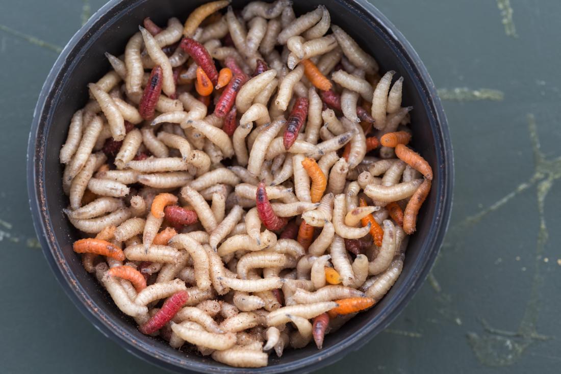 comer gusanos