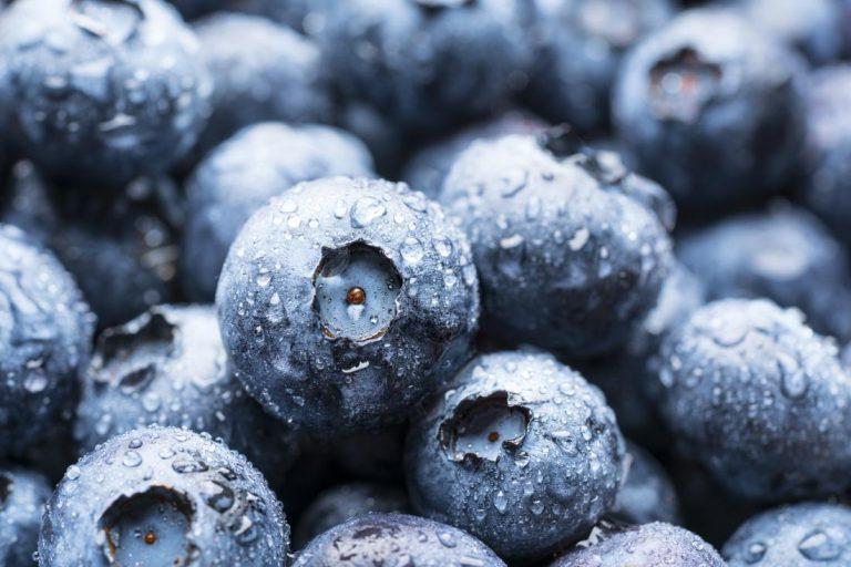 ¿Qué alimentos son buenos para los riñones?