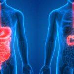 Comer, digerir y construir músculo